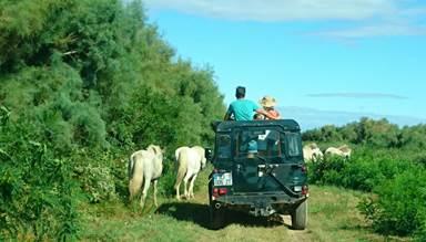 safari photo en 4x4 dans un domaine privé - exclusivité