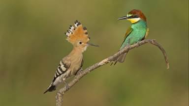 Centre Ornithologique