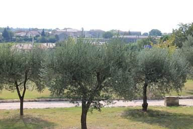 LES LAURIERS DU MAS CAYREL oliviers