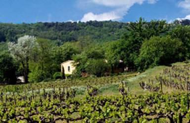 MAISON PONS au coeur des vignes