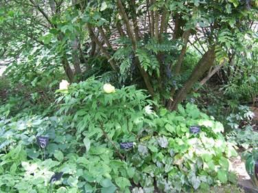 Temple kitchen-gardens