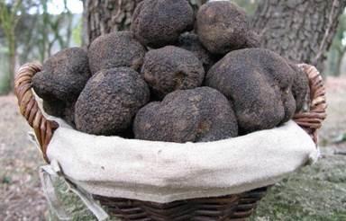 Les Truffières d'Uzès, trufficulteur Michel Tournayre