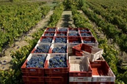 De ferme en ferme - Domaine coste Longuière