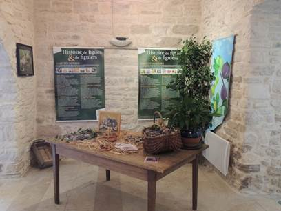 Exposition de la figue et du figuier