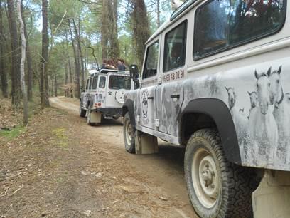 Camargue Sauvage Safari 4x4