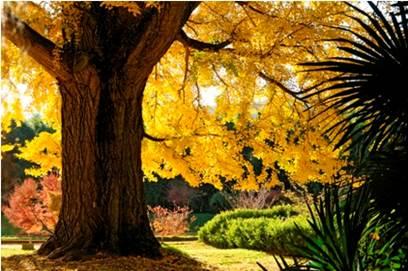 Journée des Plantes à la Bambouseraie