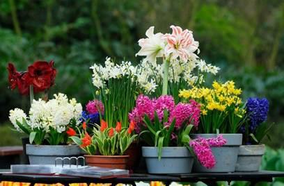 Vente de fleurs et de plants