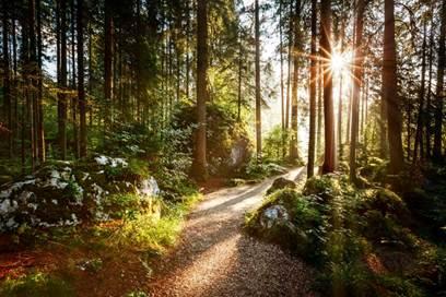Balade à la découverte du bois de Sauvages