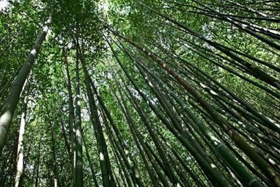 Les couleurs d'automne à la Bambouseraie