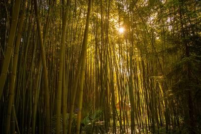 La Bambouseraie en Cévennes