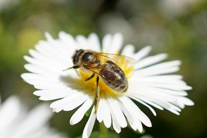 Le grenier aux abeilles