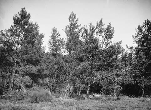 Arboretum de Puechagut