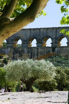 Pont du Gard - Olivier