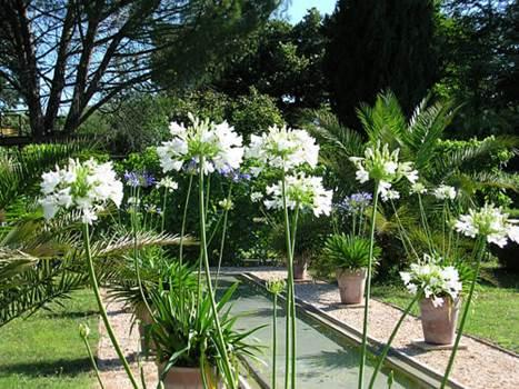 jardin du Mas du Caroubier
