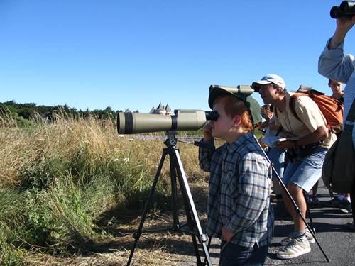 Sortie Ornithologique avec David Lédan à Sarzeau