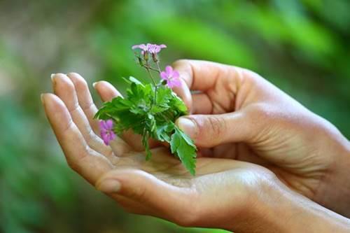 Découvrez et dégustez les plantes sauvages