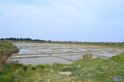 Marais de Lasné