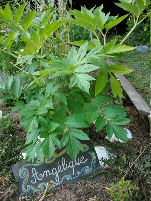Ateliers et sorties plantes sauvages comestibles et médicinales