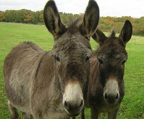 Walks with donkeys and various activities ...