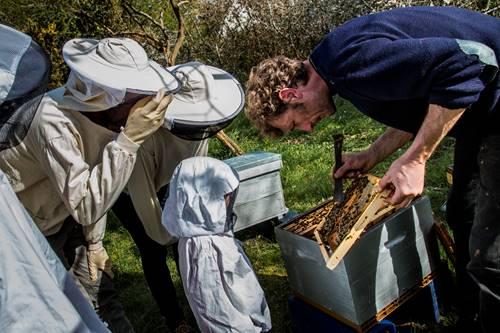 Visite pédagogique : Voyage au centre de la ruche