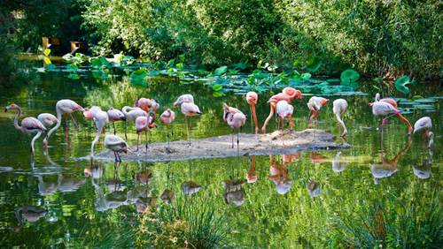 Branféré : Parc animalier et botanique - Parcabout