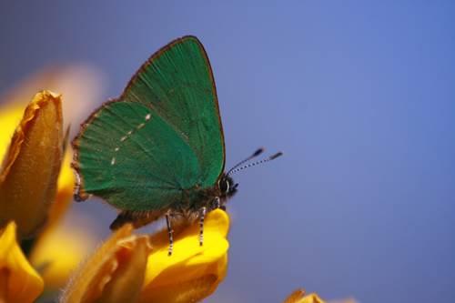 Balade nature : Papillons et libellules