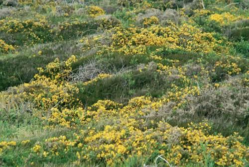 Les landes et pelouses littorales