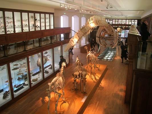 Museum de Nantes