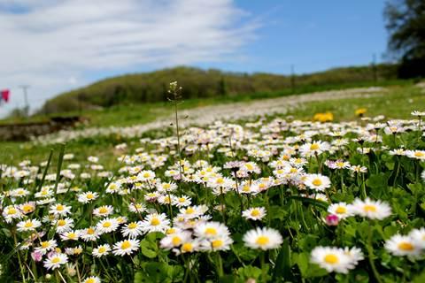 Initiation à la reconnaissance des plantes sauvages comestible