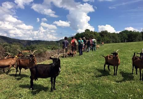 L'Agglo en Balade - Les chèvres de Bellis