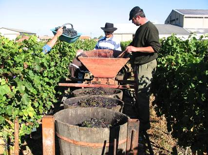 Les Vins de Saint Sardos