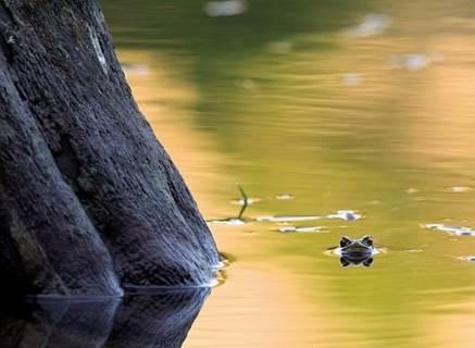 La rivière du plateau