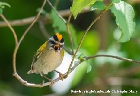 L'Agglo en Balade - Les Oiseaux