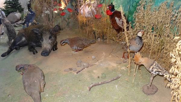 Musée de la Chasse te de la Nature: animaux
