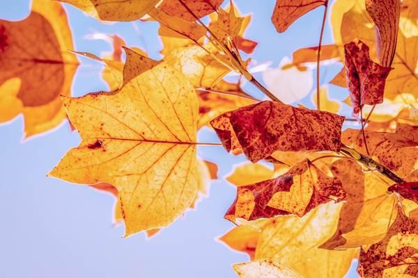 fete de l'automne