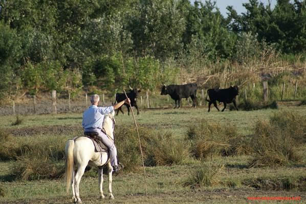 taureau et manadier