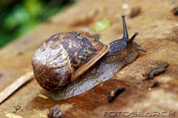 Les Escargots de l'Uzège