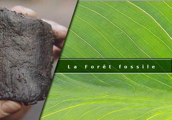 La Forêt Fossile de Champclauson