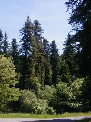 Forêt de Sainte Croix