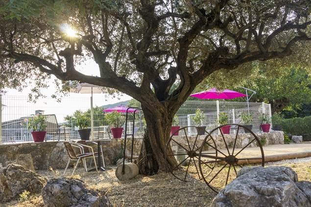 Sous l'olivier Mas du Bouquet