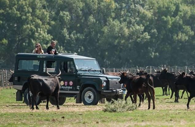 Safari Camargue Autrement