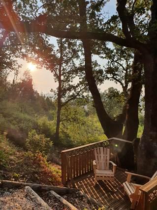 lever de soleil sur le grand chêne