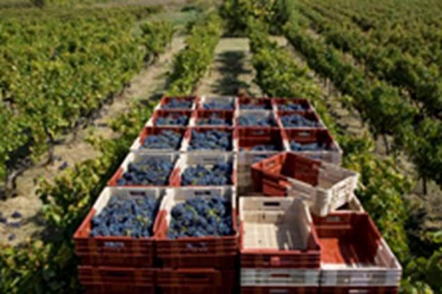 De ferme en ferme - Domaine coste Longuière - LEZAN
