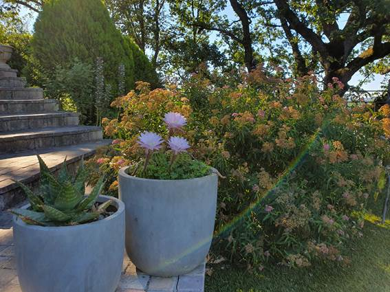 les belles fleurs des plantes grasses
