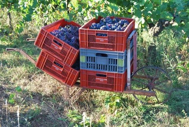 Domaine des Vignes Rouges producteur de vins