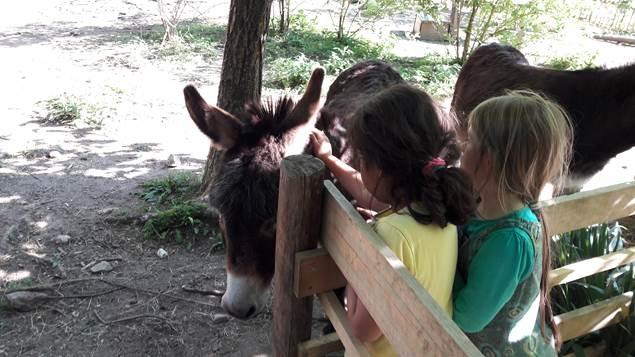 Pardum d'aventure - les ânes