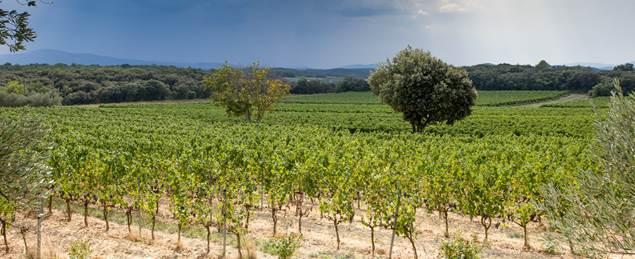 Domaine Terres d'Hachene - ST NAZAIRE DES GARDIES