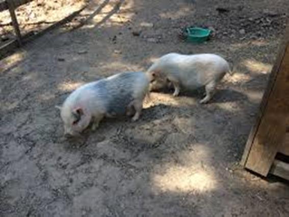 Jardin animalier de Mialet