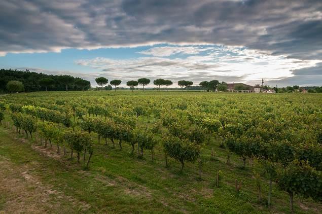 Vignoble du Frontonnais