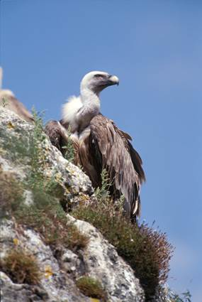 maison-des-vautours-lozere